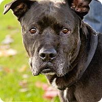 Adopt A Pet :: Happy - Marina del Rey, CA