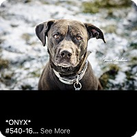 Adopt A Pet :: Onyx - ADOPTED! - Zanesville, OH