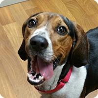 Adopt A Pet :: Buster - Lisbon, OH