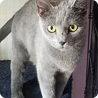 Adopt A Pet :: Misty - Fayette City, PA