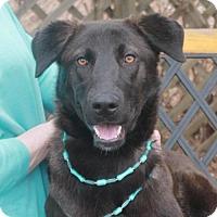 Adopt A Pet :: Daisy - Garfield Heights, OH