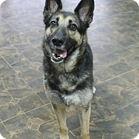 Adopt A Pet :: Kiki - Rockwall, TX
