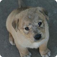 Adopt A Pet :: ZANE - Torrance, CA