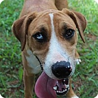 Adopt A Pet :: Gamer--Reduced fee to $200 - Foster, RI