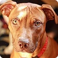 Adopt A Pet :: Mimi - Reisterstown, MD