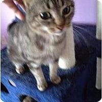 Adopt A Pet :: Ms. Cat - Mobile, AL