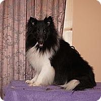 Adopt A Pet :: Prissy - Alderson, WV