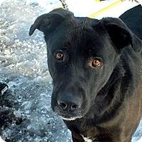 Adopt A Pet :: Bolt - Tinton Falls, NJ