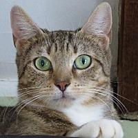 Adopt A Pet :: PREZIOSA - NYC, NY
