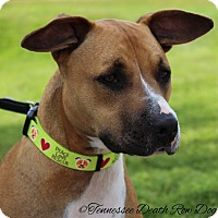 Adopt A Pet :: Delilah - Mount Juliet, TN