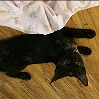 Adopt A Pet :: Sasha 2 - Burbank, CA