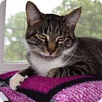 Adopt A Pet :: Jesse - Canastota, NY