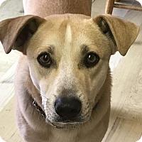 Adopt A Pet :: CJ - San Jose, CA