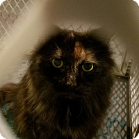 Adopt A Pet :: Tancy - Geneseo, IL