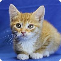 Adopt A Pet :: Laurel - Winston-Salem, NC
