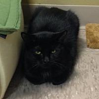 Adopt A Pet :: Anchor - Byron Center, MI