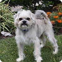 Adopt A Pet :: HOFFMAN - Newport Beach, CA