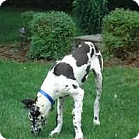 Adopt A Pet :: Zoey - Inver Grove Heights, MN