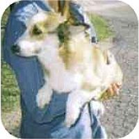 Adopt A Pet :: Miss Rio - Inola, OK