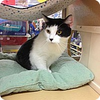 Adopt A Pet :: Teri - Monroe, GA