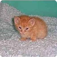 Adopt A Pet :: Bob - Secaucus, NJ