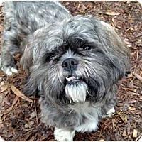 Adopt A Pet :: Quon - Mocksville, NC