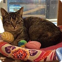 Adopt A Pet :: Speedy - Byron Center, MI
