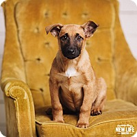 Adopt A Pet :: Bow Wow - Portland, OR