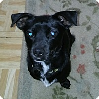 Adopt A Pet :: Teddy - Gig Harbor, WA