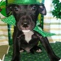Adopt A Pet :: Patrick - Detroit, MI