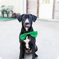 Adopt A Pet :: Atticus - Portland, OR