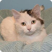 Adopt A Pet :: Solange - Cincinnati, OH