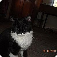 Adopt A Pet :: Angel - Riverside, RI
