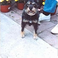 Adopt A Pet :: Precious - Clementon, NJ