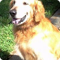 Adopt A Pet :: Raider - Murdock, FL