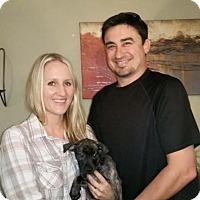 Adopt A Pet :: Emery - Sacramento, CA