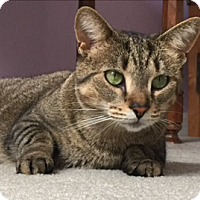 Adopt A Pet :: Beauty - Mount Clemens, MI