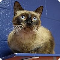 Adopt A Pet :: Tory - Canastota, NY