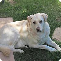 Adopt A Pet :: Buffer - Incline Village, NV