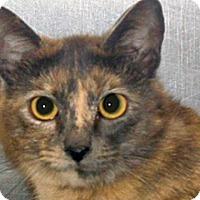 Adopt A Pet :: Sushi - Wildomar, CA