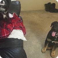 Adopt A Pet :: grizzly - Sacramento, CA