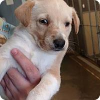 Adopt A Pet :: Nike($400) - Redding, CA