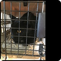 Adopt A Pet :: Mace - Fallbrook, CA