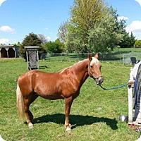Adopt A Pet :: Honesty - Front Royal, VA