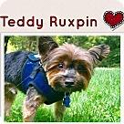 Adopt A Pet :: Teddy Ruxpin