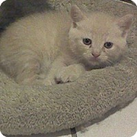 Adopt A Pet :: Apollo - Ft. Lauderdale, FL