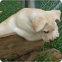 Adopt A Pet :: Jill - Pointblank, TX