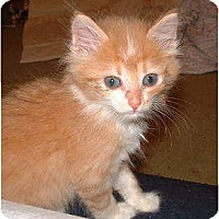 Adopt A Pet :: Feather - Richfield, OH