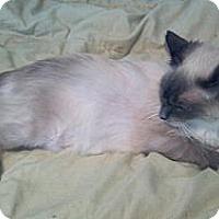 Adopt A Pet :: Princess - Simpsonville, SC