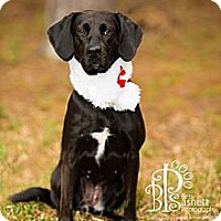 Adopt A Pet :: Maggie - Tallahassee, FL